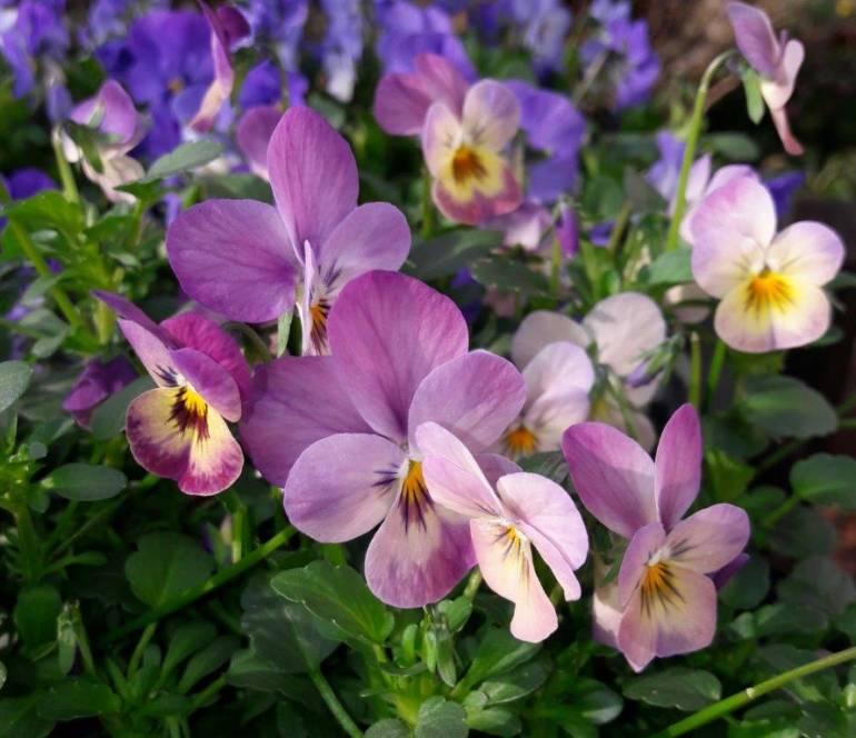 Saisonales Pflanzenangebot