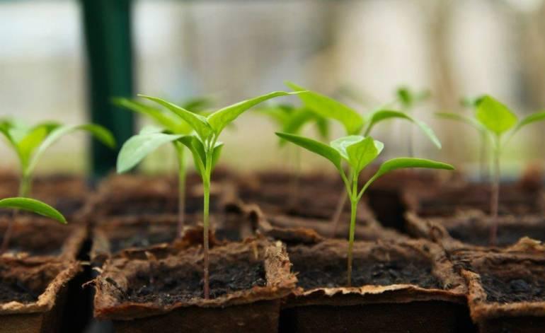 Kräuter- und Gemüsepflanzen